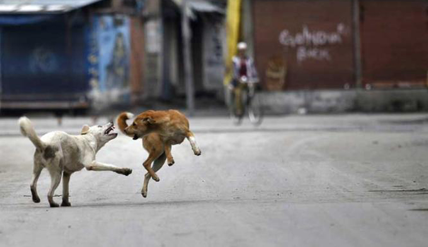 SC Refuses To Pass Interim Order Against Rampant Culling of Stray Dogs In Sitapur District Of UP