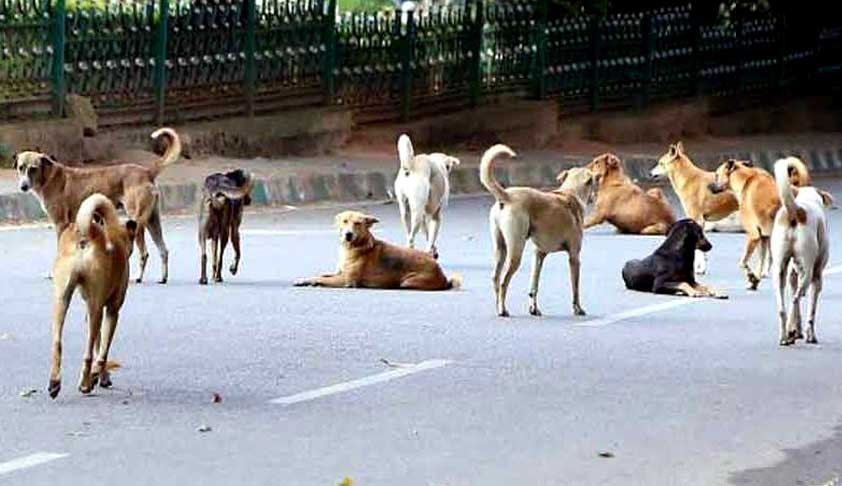 Stray Dogs Too Have A Right To Life: SC