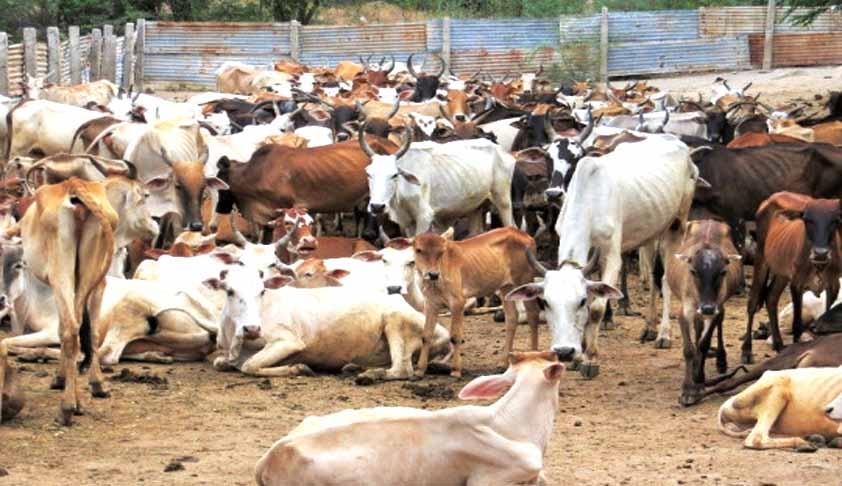 Ban On Trade Of Cattle For Slaughter, Does The Centre Have The Power?