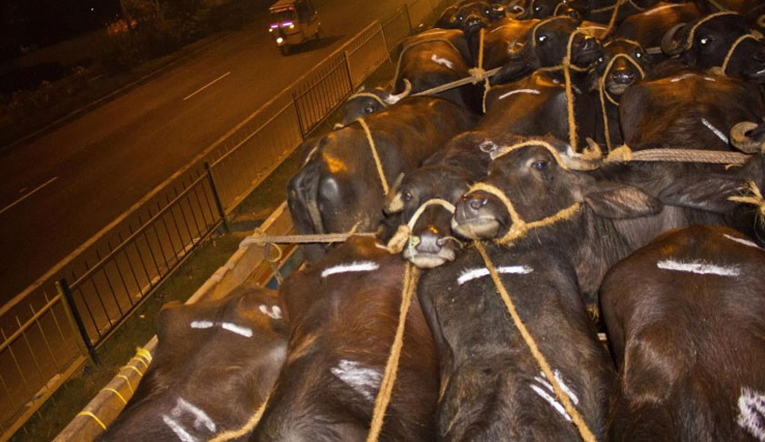 Ensure Prompt Action On Complaints Of Illegal Transportation Of Animals: Delhi HC To Authorities