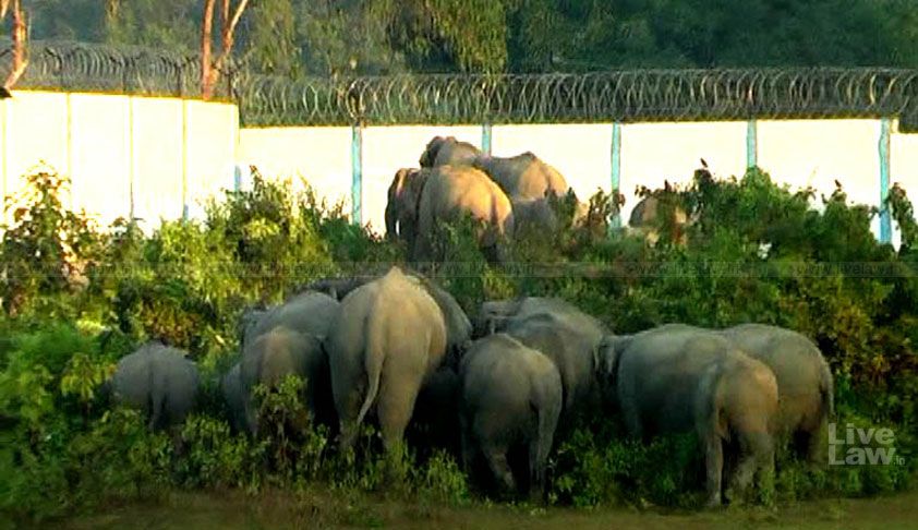 Tear Down This Wall: NGT Refuses To Review Its 2016 Order To Demolish NRL Wall Erected In Elephant Corridor Near Kaziranga Nat'l Park