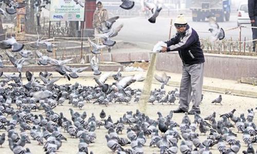 """""""Bird Feeding In Public-A Law Urgently Required !"""""""
