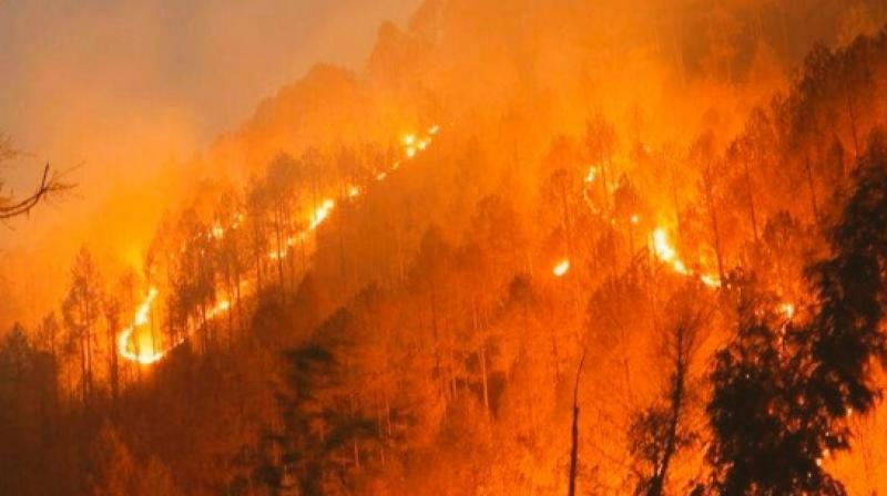 SC To Consider PIL For Steps To Prevent Wild Fires In Uttarakhand