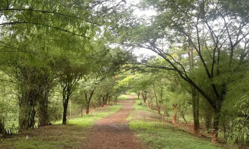 #Aarey: Special Bench Of Bombay HC Refuses Stay On Cutting Of Trees As Petitioners Wish To Move SC [Read Order]