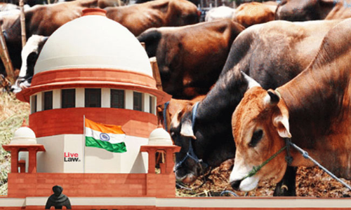 When A Man Filed A Writ Petition Before SC Seeking Medical Help To His Five Cows !