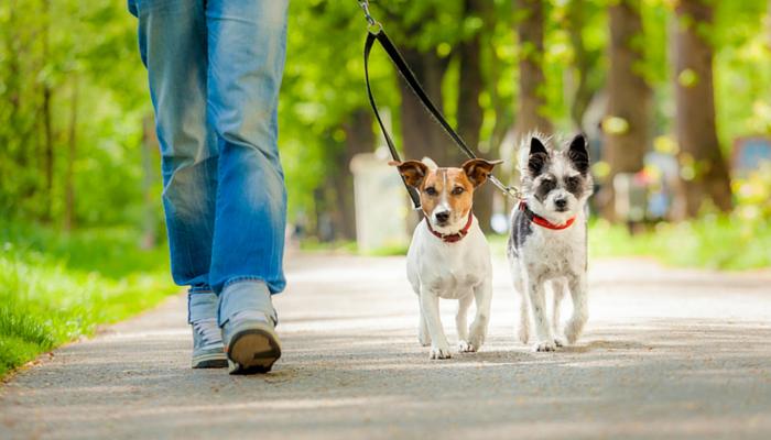 Pets Can Be Taken Outside For Walks During Lockdown, Maharashtra Govt Tells Bombay HC