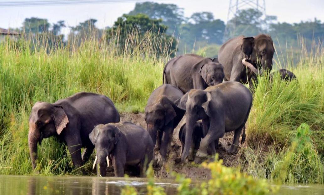 Denotification Of Shivalik Elephant Reserve In Uttarakhand: Over 80 Advocates Urge High Court Chief Justice To Take Suo Moto Cognizance