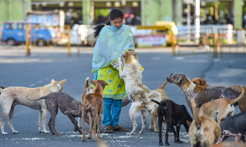 Chalk Out Holistic Plan For General Treatment Of Stray Animals Across State; Vaccinate Dogs, Cats If Necessary: Madras High Court To Govt