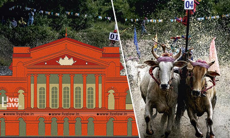 Karnataka High Court Permits Bull Racing, Directs State To Ensure Animals Are Not Tortured